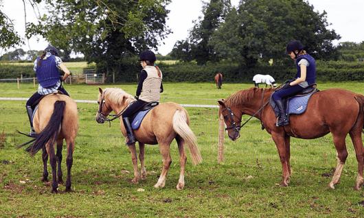 British Study Centers (Wycliffe верховая езда). Фото 11