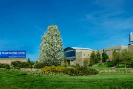 Niagara CollegeФото7